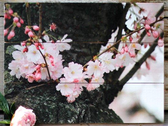Blumenfoto auf holz